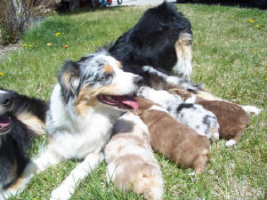 mom-and-pups.jpg